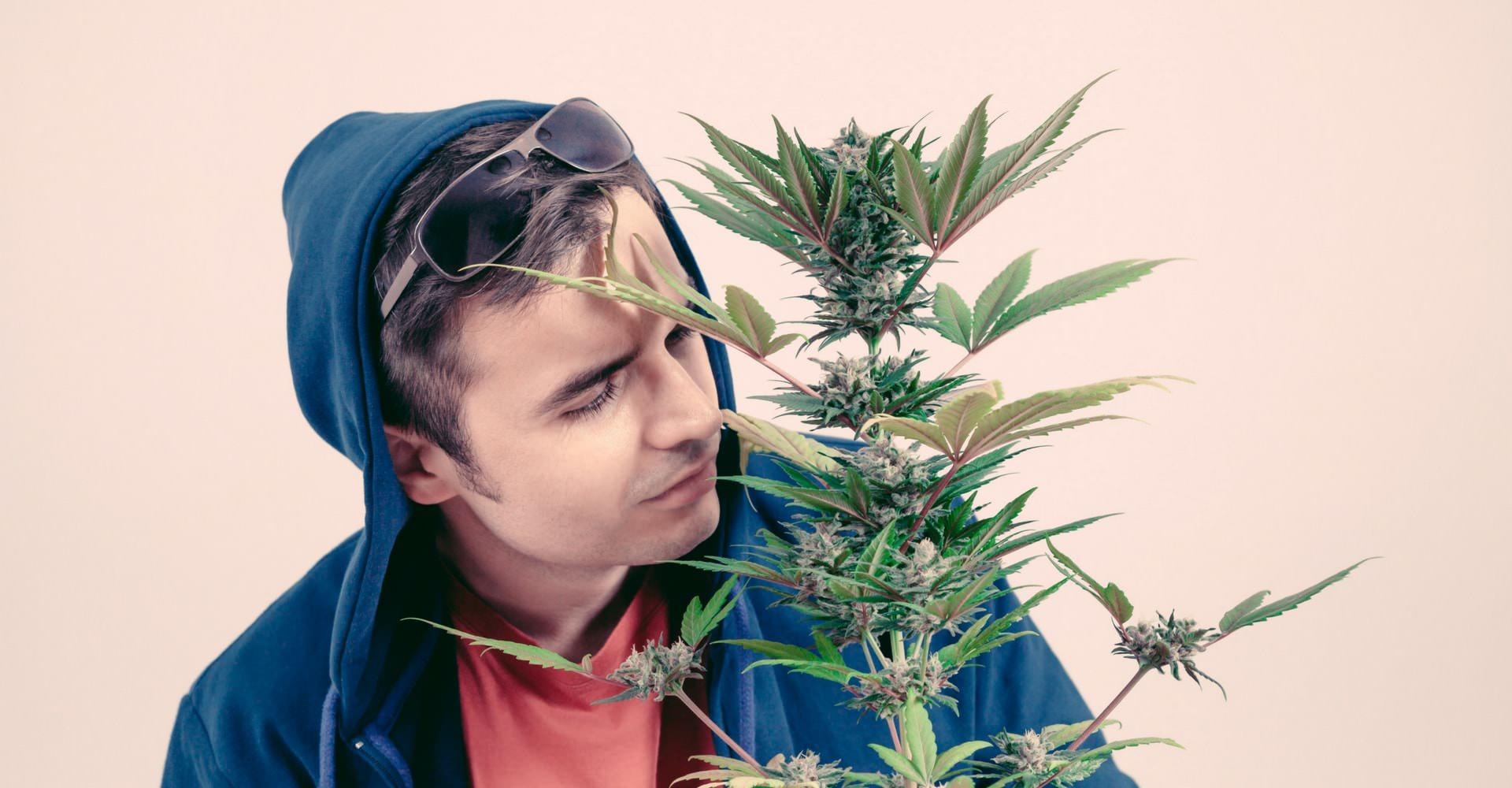 Las 7 razones por las que debes cultivar tu propia marihuana