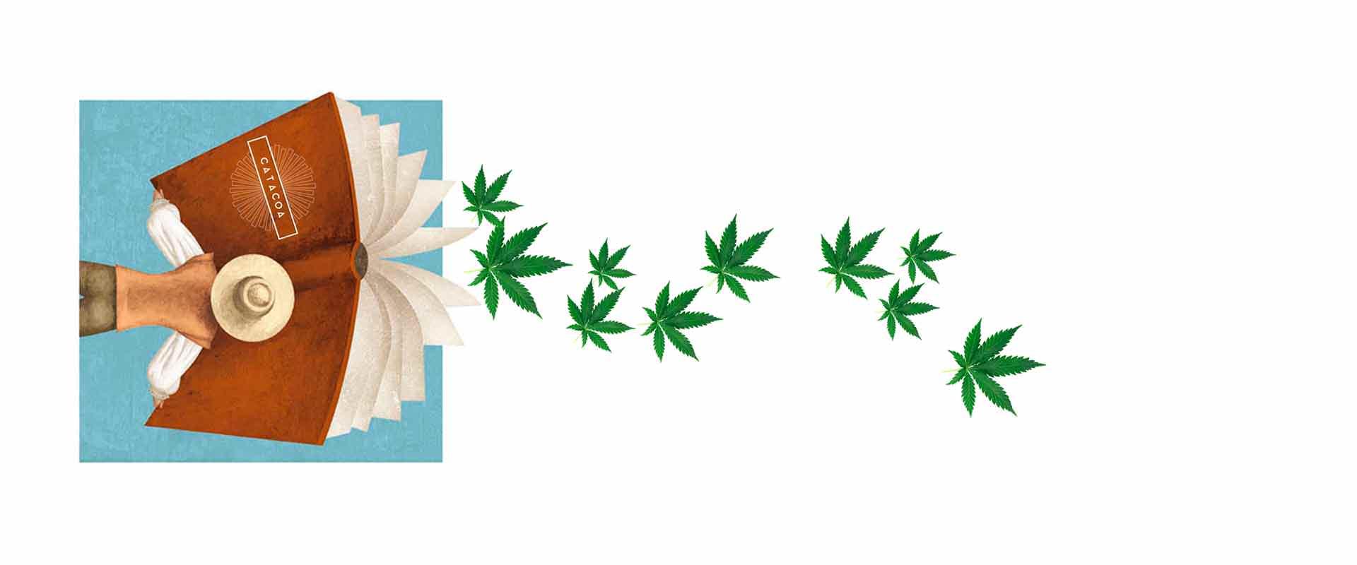 Glosario Urbano del Marihuanero: La lista completa  (Actualizado 2020)