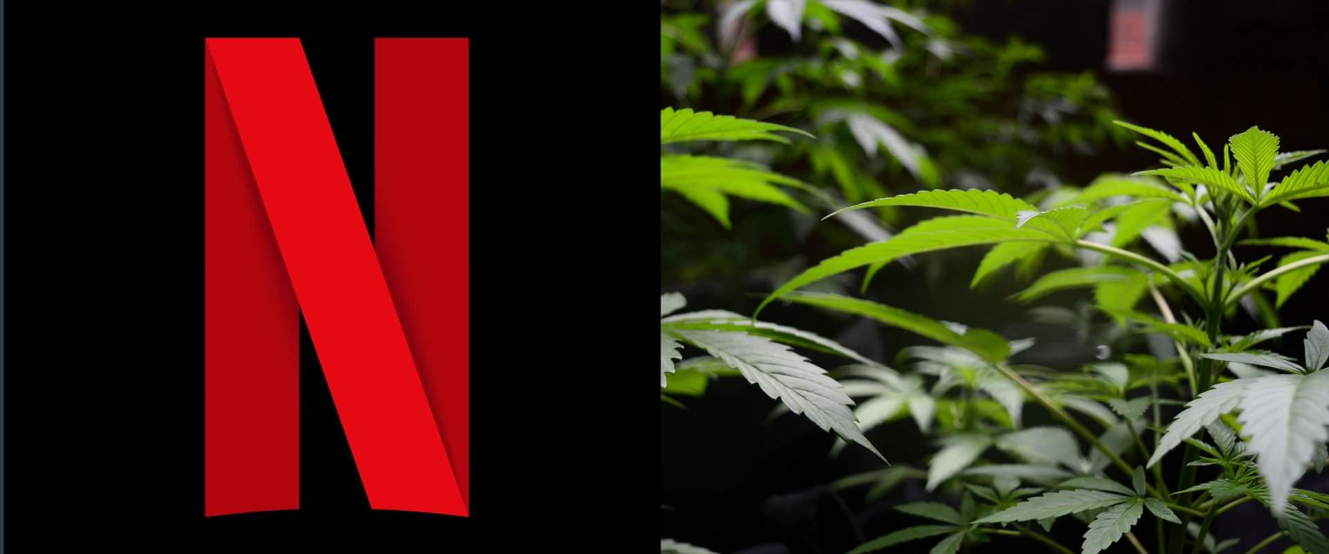 Potflix: Netflix + marihuana.  14 películas, series y documentales para marihuaneros en Netflix  [Actualizado 2021]