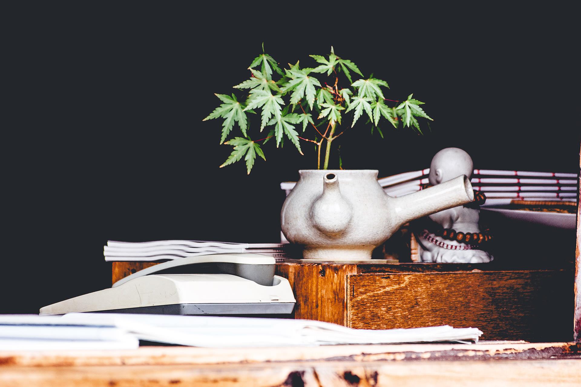 Maceta con planta de marihuana sobre escritorio